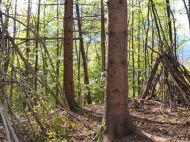 Jahreszeitenweg-Golling-Holz