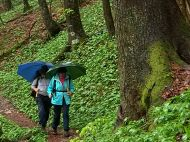 Golling_Regenwandern