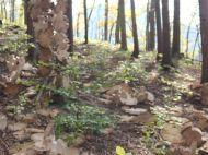 Jahreszeitenweg-Golling-Steckstation