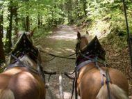 Pferdekutschenfahrt_Golling